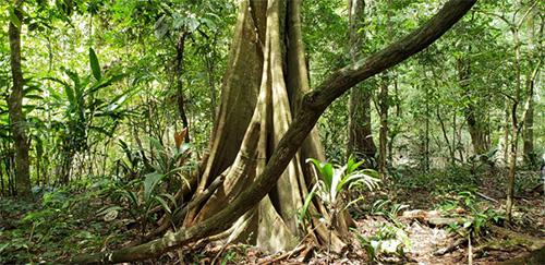 Regenwald, Rio Marañon, Amazonas Peru